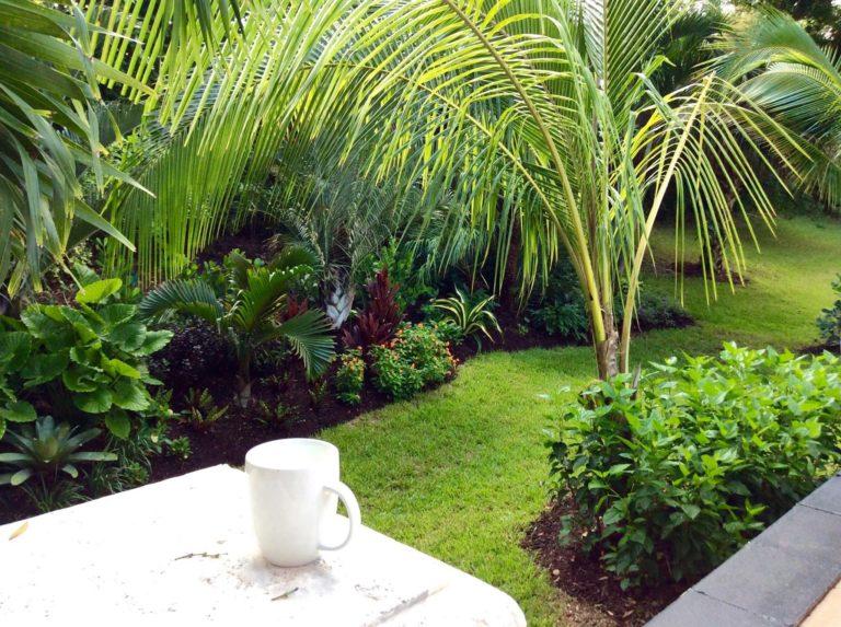 Coconut-elephant-ear-and-bottle-palm-1-768x573